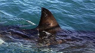 Égypte : un touriste tchèque tué par un requin en mer Rouge