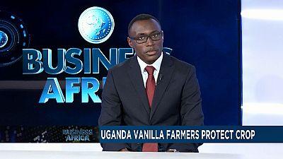 Les producteurs de vanille en Ouganda protègent leur culture[Business Africa]