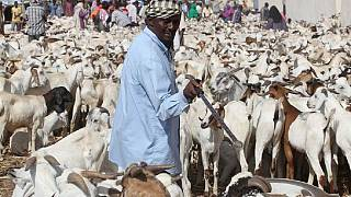 Saudi Arabia rejects 27,000 sheep and goats from Somalia