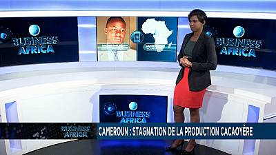 Cameroon: stagnation in cocoa production