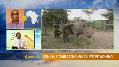 Death of 11 black rhinos: combating wildlife poaching in Kenya