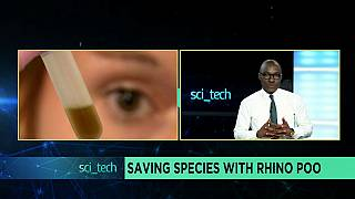 Saving species with Rhino poo [Sci tech]