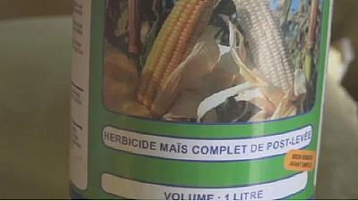 Cancer fear in Benin republic over herbicide use [The Morning Call]
