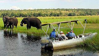 Botswana : la mort de nombreux éléphants au cœur d'un débat houleux