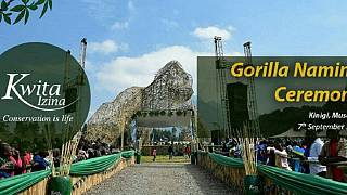 Akon, Obasanjo to lead celebrities at gorilla naming ceremony in Rwanda