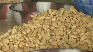 Ivory Coast: cashew nut slump on low prices but farmers are hopeful