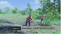 Japan-Senegal: supporting small-scale horticulturists