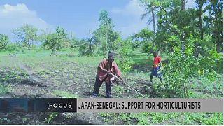 Japon-Sénégal : soutenir les petits horticulteurs
