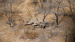 Le Botswana rejette le rapport d'EWB sur la mort des éléphants