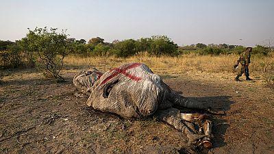 Botswana to step up anti-poaching measures