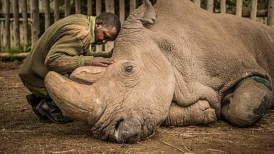 South Africa rhino poaching drops significantly