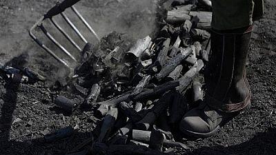 Over 200,000 bags of Somalia charcoal smuggled to Iraq
