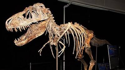 South Africa: New species of dinosaur discovered
