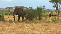 Tanzanie : une nouvelle technologie qui protège les animaux et facilite le travail des gardes forestiers