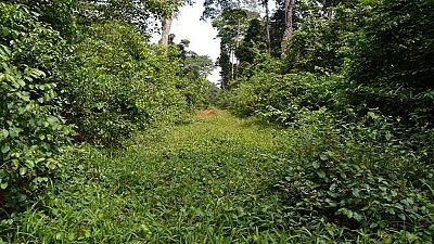 Gabon - forêt : des villageois en colère revendiquent leurs droits