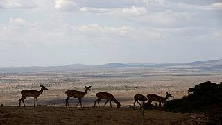 Conservationists re-introduce zebras in Tanzania's Kitulo national park
