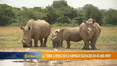 La Terre a perdu 60% d'animaux sauvages en 40 ans-WWF [The Morning Call]