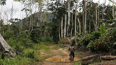Cameroun : des ouvriers d'une société d'Etat amputés dans le sud-ouest