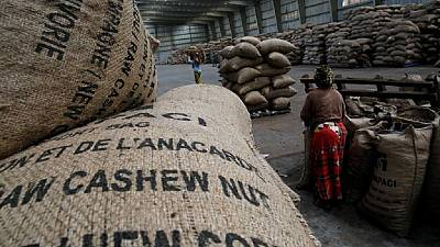 Tanzania farmers believe govt cashew payment after army collection