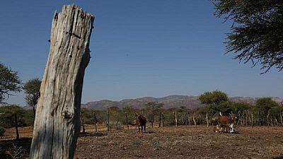 Afrique du Sud : la réforme agraire sera adoptée