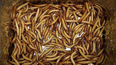 Gastronomie: faute de viande, on mange des larves ou des vers