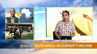 Campaign to free elephant in South Africa zoo [The Morning Call]
