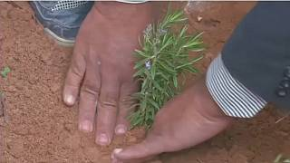 Green initiative enhances tree planting in Libya