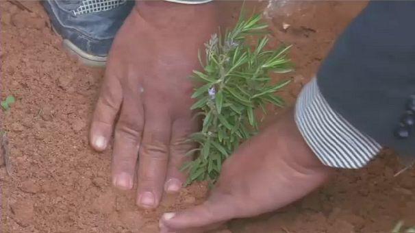 Une initiative verte locale encourage les efforts de reboisement en Libye