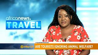 Les touristes influencent-ils le bien-être des animaux ?