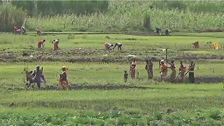Le conflit entre le Burundi et le Rwanda affecte les agriculteurs