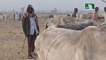 Nigeria-élections : un peu d'espoir pour les éleveurs et fermiers