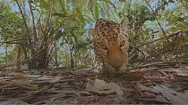 "A safari experience through ""VR"" technology"