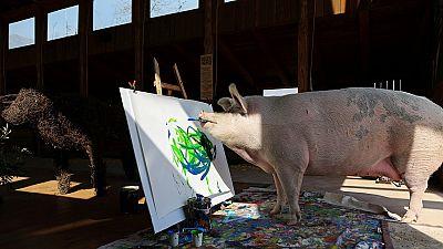 Afrique du Sud : un cochon peintre devient célèbre