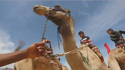 Course de chameaux en Égypte: des enfants face aux robots