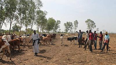 Mali : plus d'une centaine de civils tués pendant une visite du Conseil de sécurité au Sahel