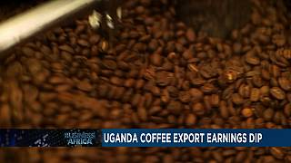 Uganda coffee exports earnings dip in January