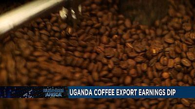 Ouganda : exportations de café en baisse