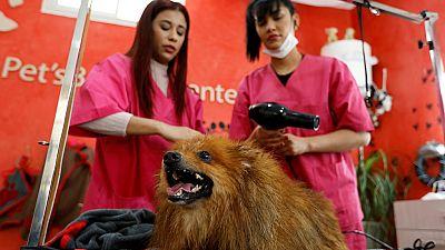 Tunisie : des animaux aux petits soins dans un salon de coiffure spécialisé