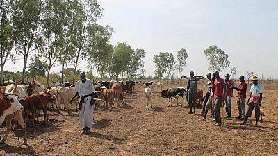 Mali : des survivants racontent le massacre d'Ogossagou