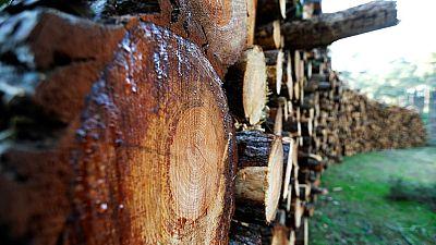 Bois du Gabon : permis d'exploiter suspendu pour un forestier chinois