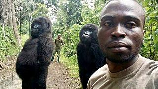 Selfie by caretakers, gorillas in DRC's Virunga park goes viral