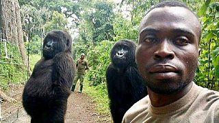 RDC : un éco-garde tué après le buzz des selfies avec des gorilles