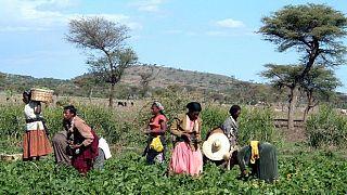 Les violences intercommunautaires font au moins 17 tués en Ethiopie