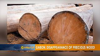 Govt seized timber wood missing in Gabon [Morning Call]