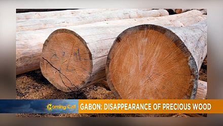 Gabon : des conteneurs de bois disparaissent au port d'Owendo [Morning Call]