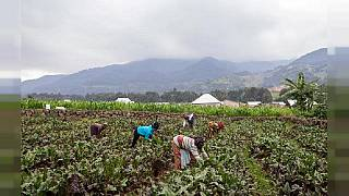 Small farmers told to exploit agroforestry