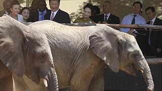 Zimbabwe rakes in $2.7m selling baby elephants in China