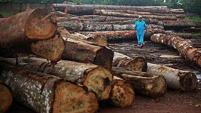Gabon president vows to nab thieves of $250m protected hardwood