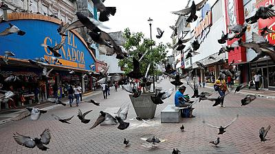 Pigeons face deadly odds in the Phillipines