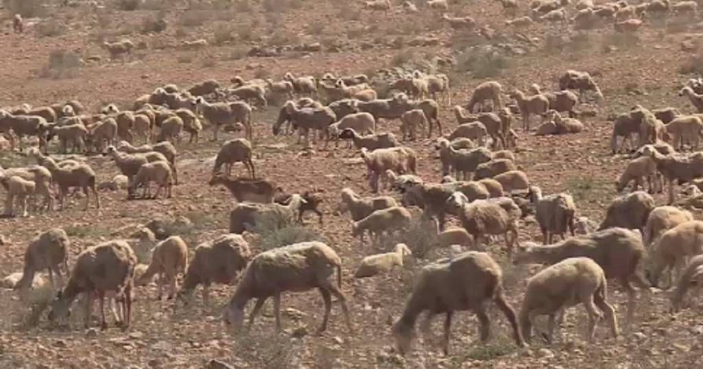 Nomadic farmers in Morroco assert their rights to freely move and graze livestock